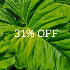 31% off