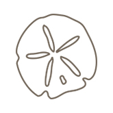 Example of a sand dollar etching